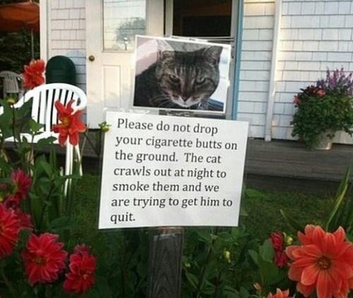 For the Cat's Sake