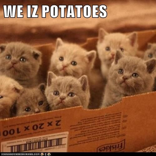 WE IZ POTATOES