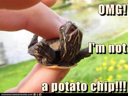 OMG! I'm not a potato chip!!!