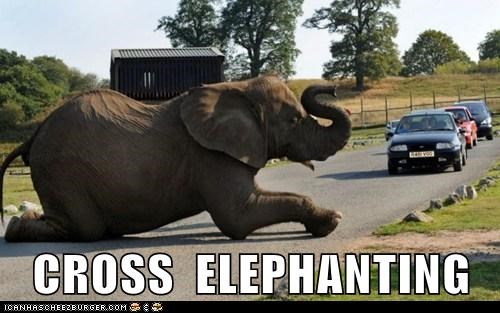 CROSS  ELEPHANTING