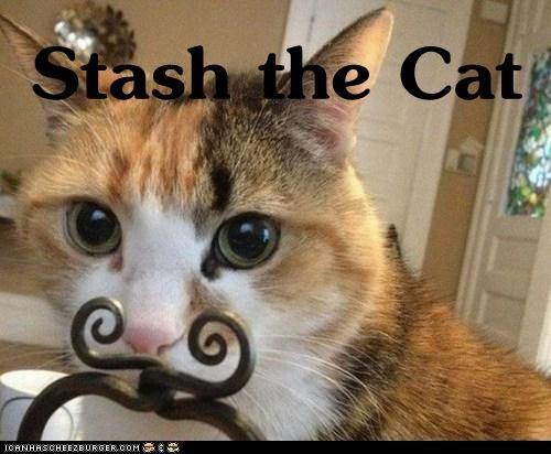 Stash the Cat