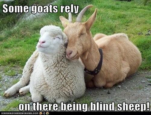 Some goats rely  on there being blind sheep!