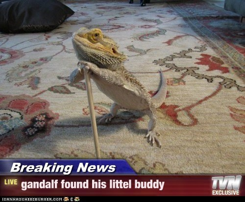 Breaking News - gandalf found his littel buddy