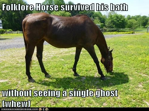 Folklore Horse survived his bath  without seeing a single ghost (whew)