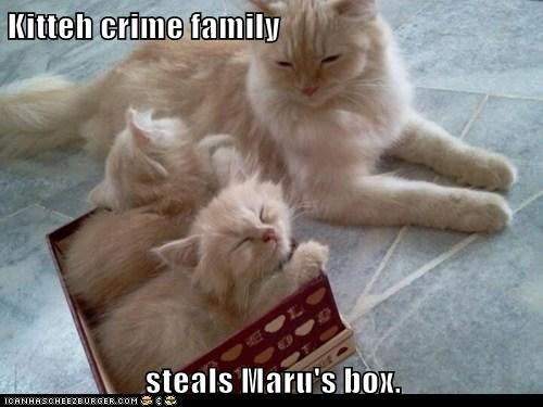 Kitteh crime family  steals Maru's box.