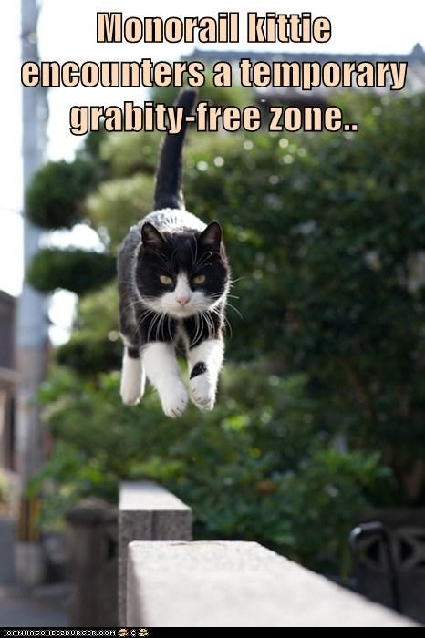 Monorail kittie encounters a temporary grabity-free zone..