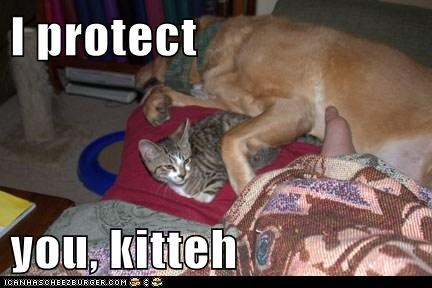 I protect   you, kitteh