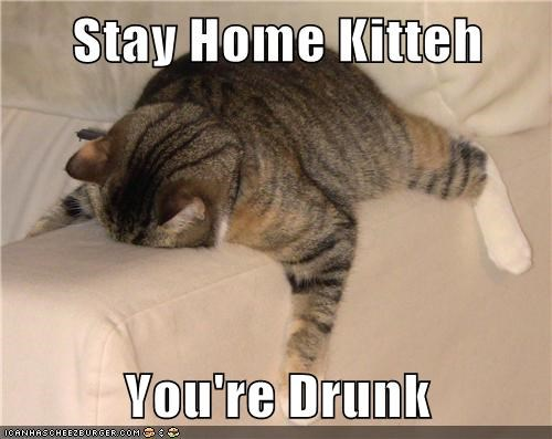 Stay Home Kitteh  You're Drunk