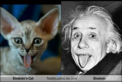 Einstein's Cat Totally Looks Like Einstein