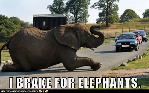I BRAKE FOR ELEPHANTS.