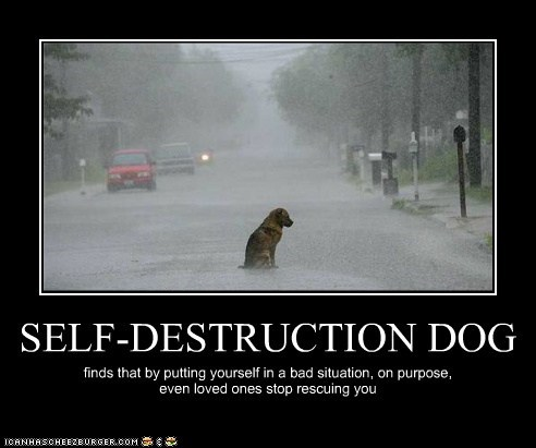 SELF-DESTRUCTION DOG