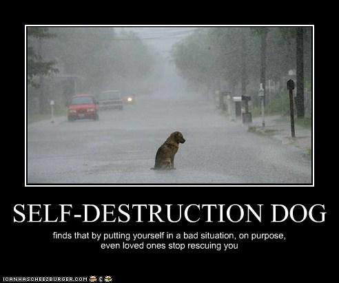 SELF-DESTRUCTION DOG