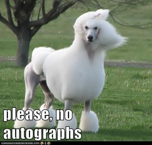 please, no autographs