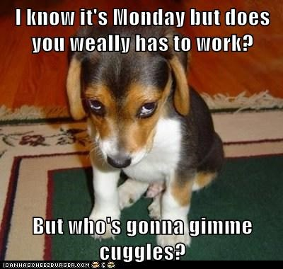I know it's Monday but does you weally has to work?  But who's gonna gimme cuggles?