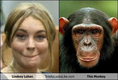 monkeys,totally looks like,funny,lindsey lohan