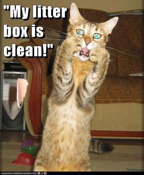 """My litter                                                      box is                                                       clean!"""