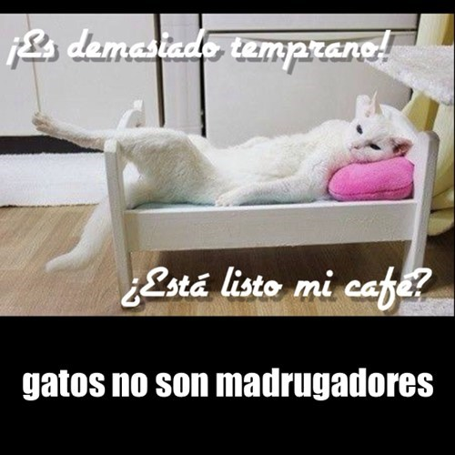 gatos no son madrugadores