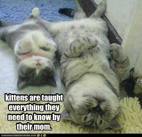 kittens are taught everything they need to know by their mom.