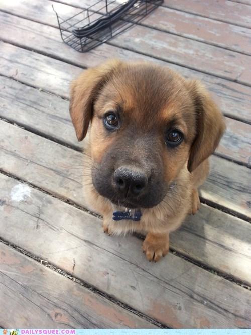 puppy,stare