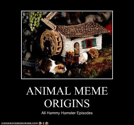 ANIMAL MEME ORIGINS