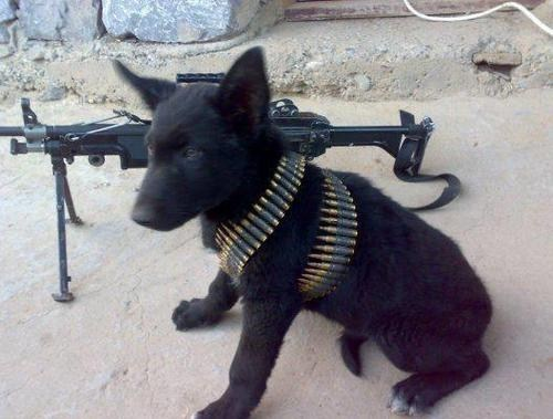 Military Dog in Action