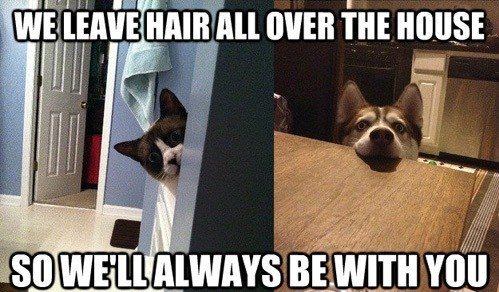 Overly Attached Pets