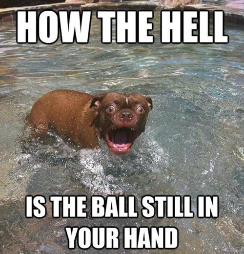 fetch,ball,pool,funny