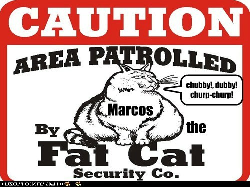 Marcos the fat cat security Co.