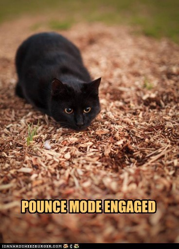 POUNCE MODE ENGAGED