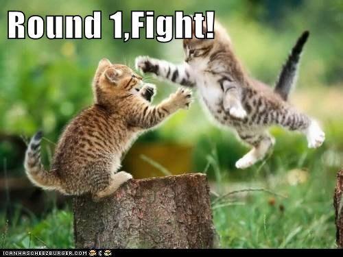 Round 1,Fight!