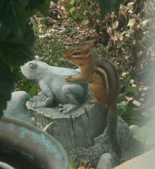Forbidden Love in the Garden