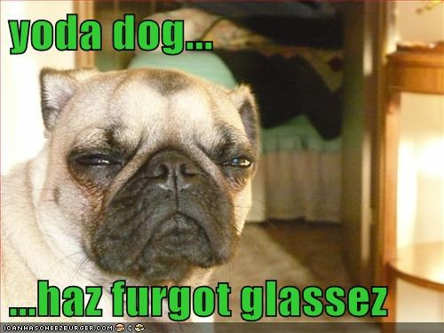 yoda dog...  ...haz furgot glassez