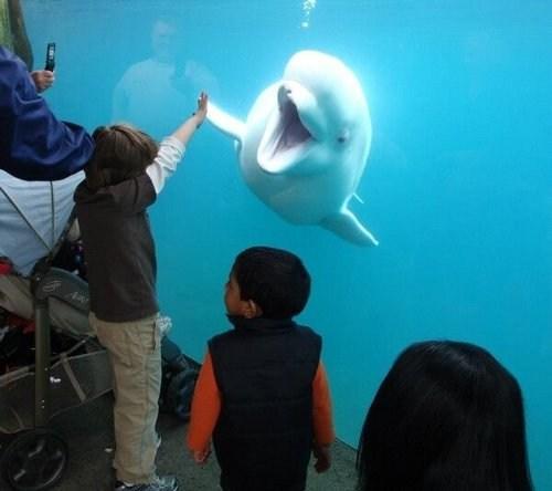kids,beluga,aquarium,funny