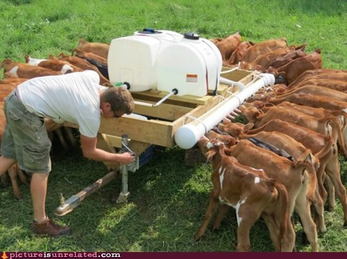 Artificial Cow