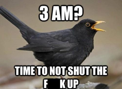 morning,bird,funny