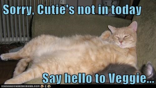 Sorry, Cutie's not in today  Say hello to Veggie...