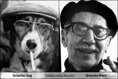Groucho Dog Totally Looks Like Groucho Marx