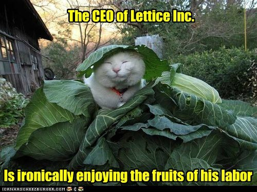 The CEO of Lettice Inc.