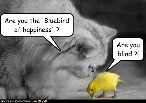 Are you the 'Bluebird of happiness' ?