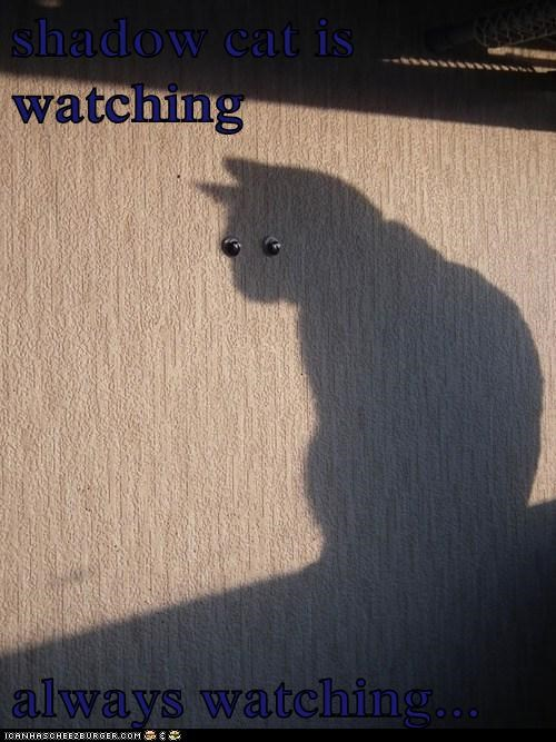 shadow cat is watching  always watching...