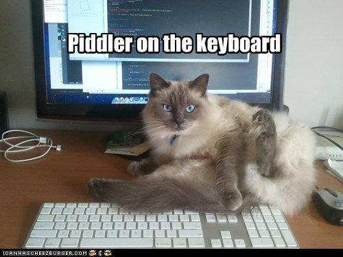 Piddler on the keyboard