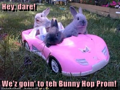 Hey, dare!  We'z goin' to teh Bunny Hop Prom!