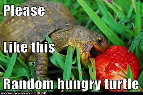 Please  Like this Random hungry turtle