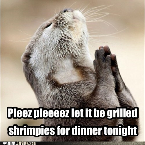 otter,food,pray,funny