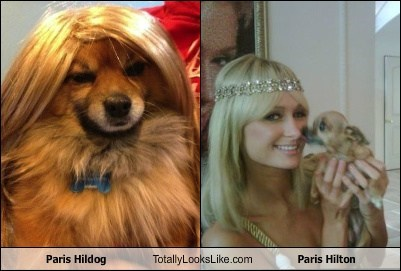 Paris Hildog Totally Looks Like Paris Hilton