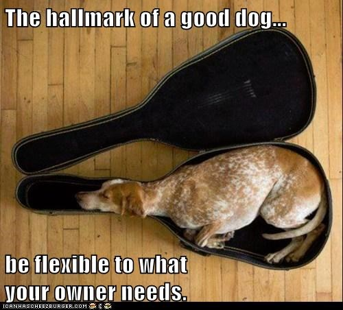The hallmark of a good dog...  be flexible to what                                                                    your owner needs.