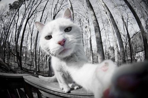 9 Cats Taking Selfies