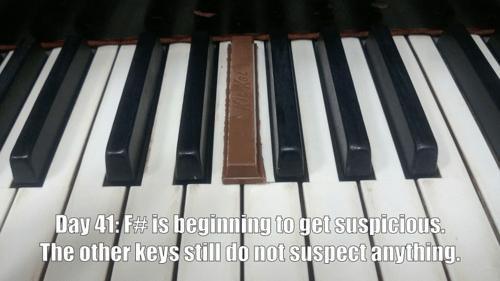 kit kat,blending in,pianos,funny