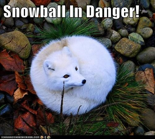 Snowball In Danger!