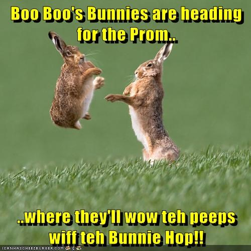 Boo Boo's Bunnies are heading for the Prom..